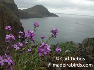 Madeira Sea-Stock in Ponta de São Lourenço